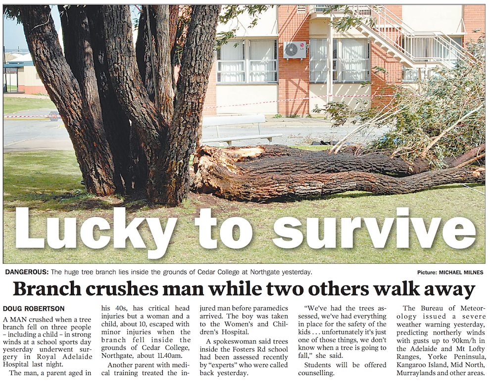 adelaide advertiser newspaper describing the accident at cedar college northgate including a photo of the tree. Title is 'lucky to survive'
