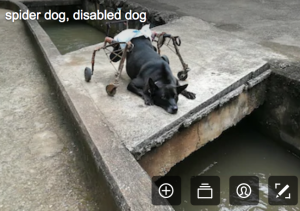 disability stock photographs - a dog in a frame and wearing a nappy