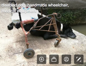 disability stock photographs - the same dog thinking about suicide?
