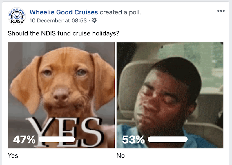Should the NDIS fund cruise holidays? is the question with a dog being the yes vote and a black man being the no vote